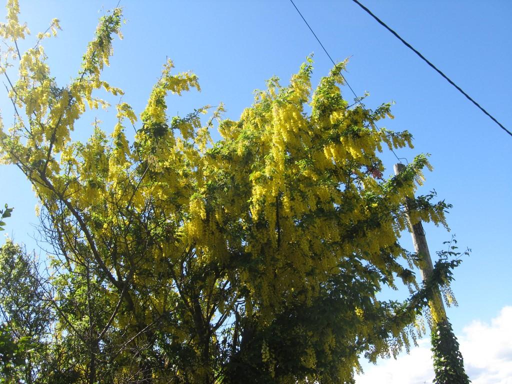Foliage enroute Charlesfort, Kinsale