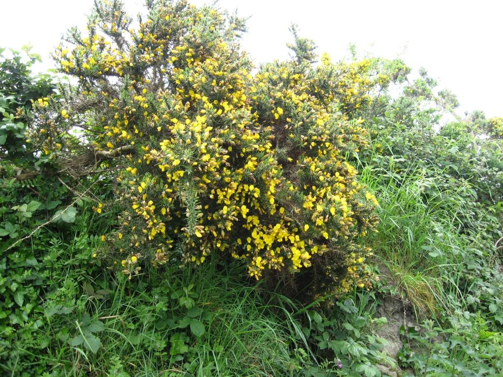 Maybush, Ennis-Kilrush Road, County Clare