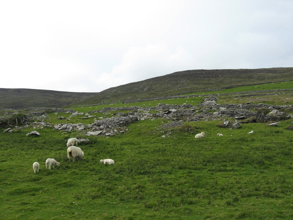 Sheep & stone , DIngle Peninsula, County Kerry